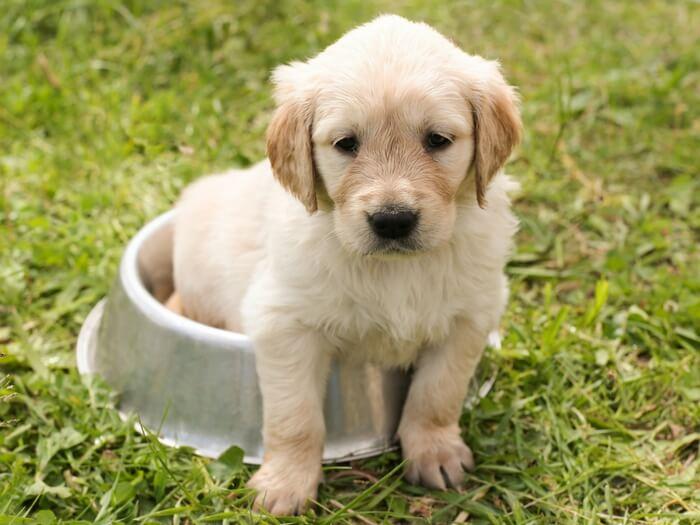 Cum Să Alegi Un Nume Pentru Câinele Tău – Câteva Recomandări