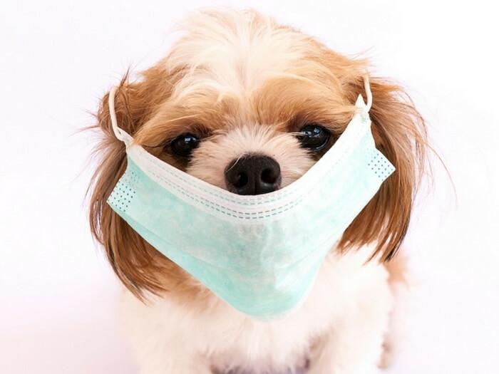 Parvoviroza La Puiul De Câine – Cum Să Previi îmbolnăvirea