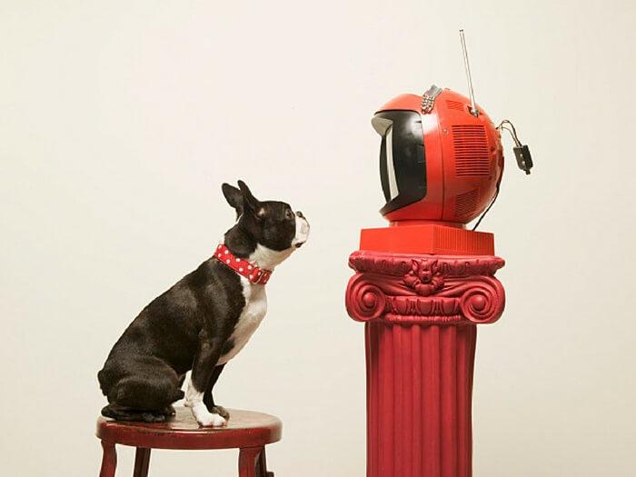 Emisiuni TV Despre Câini